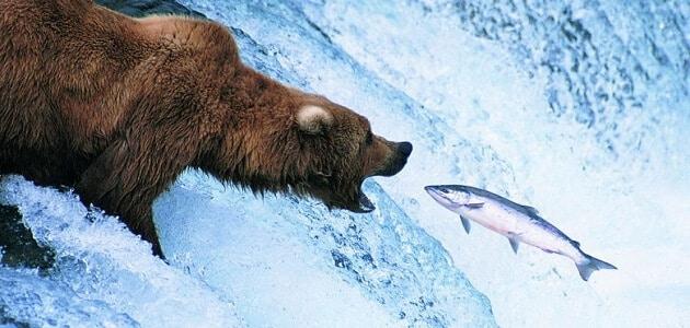 العلاقات بين الكائنات الحية في النظام البيئي