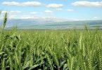 بحث عن البيئة الزراعية وما هي عناصر البيئة الزراعية