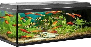 طريقة تشغيل فلتر حوض السمك