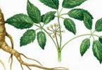 علاج تنشيط الذاكرة بالأعشاب