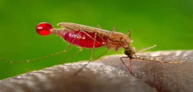 علاج مرض الملاريا الطبيعي