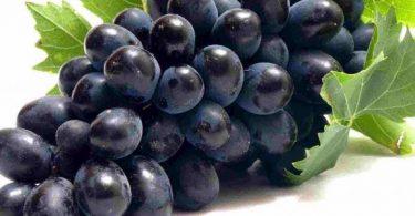 فوائد العنب البناتي للتخسيس