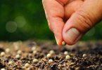 كيفية غرس البذور في التربة