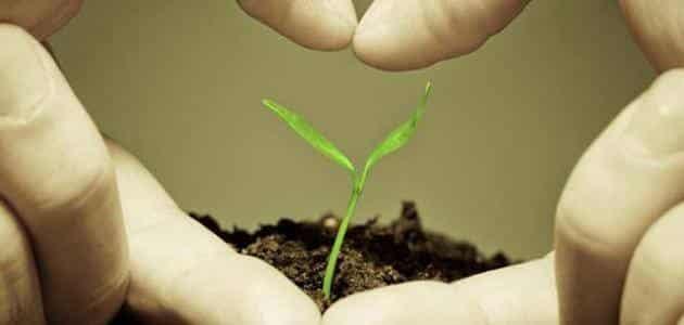 ما تأثير العوامل الخارجية على إنتاج الكتلة الحيوية