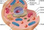 ما هي الخلية في جسم الانسان
