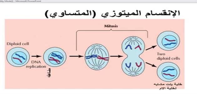 مراحل الانقسام الميتوزي والميوزي معلومة ثقافية
