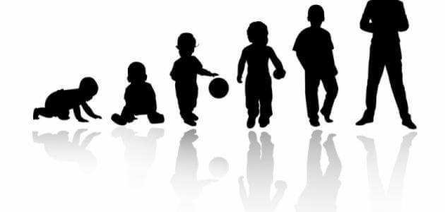 مراحل النمو العقلي المعرفي عند بياجيه