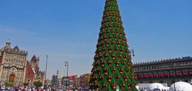 معلومات عن أكبر شجرة عيد ميلاد في العالم