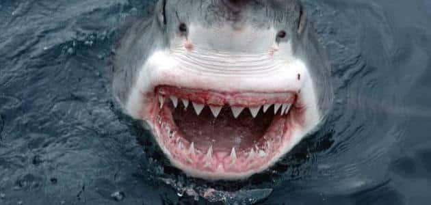 أين يعيش سمك القرش