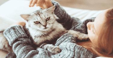 اضرار نوم القطط بجانب الانسان