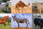 الثروة الحيوانية في العالم