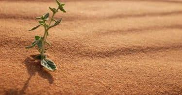 اهم خصائص النباتات الصحراويه