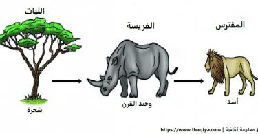 بحث عن السلسلة الغذائية عند الحيوانات