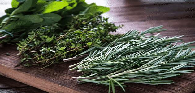 كيفية التخلص من البروتين في البول بالأعشاب