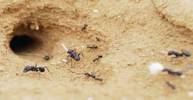 معلومات عامة عن بيت النمل