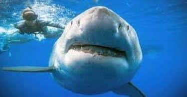 معلومات عن سمك القرش للاطفال