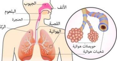 مكونات الجهاز التنفسي ووظائفه