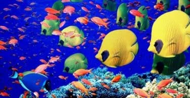 موضوع تعبير عن فوائد صناعة السمك للبيئة