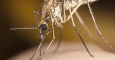دواء الملاريا ومضاعفاته