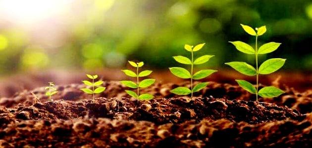تعريف التربة وأنواعها   معلومة ثقافية