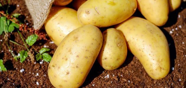 اضرار البطاطس النيه