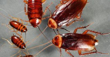 الصراصير والنمل في المنام على الفراش
