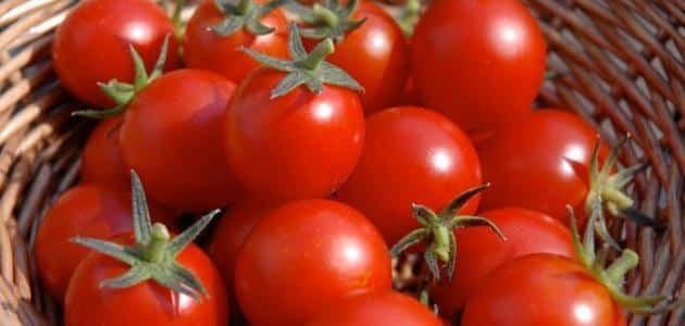 الطماطم للتخسيس