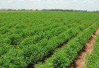 العوامل المؤثرة على البيئة في مجال الزراعة