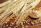 القمح ومشتقاته