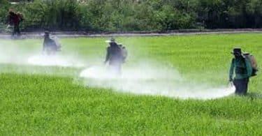 المبيدات الحشرية الكيميائية