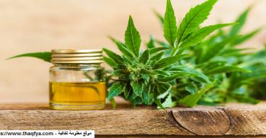 النباتات وفوائدها الطبية والغذائية