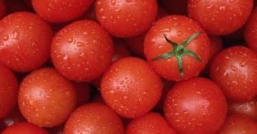 انواع الطماطم واسمائها
