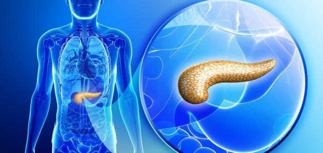 اين يقع البنكرياس والكبد
