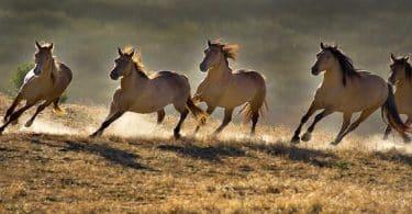 سرعة الحصان والجمل