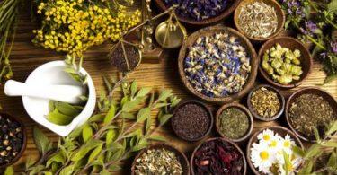 علاج الكانديدا المزمنة بالاعشاب