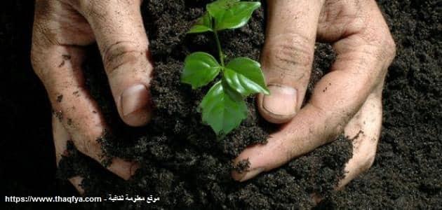 عمارة الأرض في الإسلام