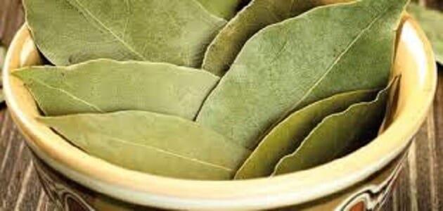 فوائد ورق الجوافة والزعتر