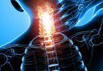 ما هو النخاع الشوكي في جسم الانسان