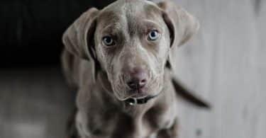 ما هو تفسير عضة الكلب في المنام