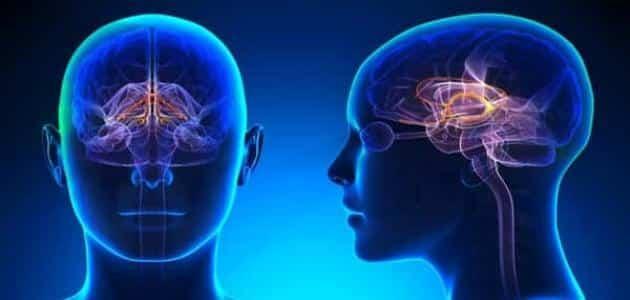 تحقيق عجز فخور مدة علاج الكهرباء الزائدة في المخ Dsvdedommel Com