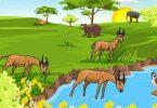 مكونات النظام البيئي المائي