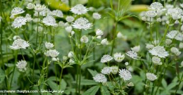 نباتات الظل في مصر