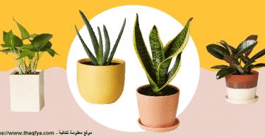 نباتات منزلية سريعة النمو وأسعارها