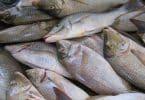 مشروع مزارع الاسماك فى مصر