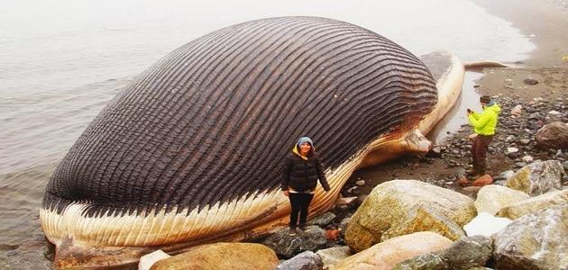 ما هو أكبر حيوان في العالم؟