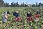 اذاعة مدرسية عن اليوم العالمي للمرأة الريفية
