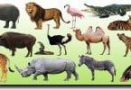 اسم حيوان من اربع حروف ؟