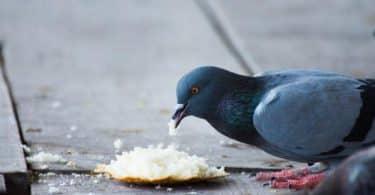 إطعام الطيور في المنام