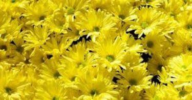 اللون الاصفر وعلم النفس