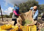بحث حول اليوم العالمي للمراة الريفية